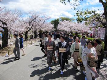 1054桜並木を歩く